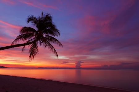 Tropical sunset with palm tree silhoette at beach mural