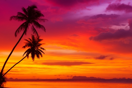 Photo pour Two palm trees silhouette on sunset tropical beach - image libre de droit