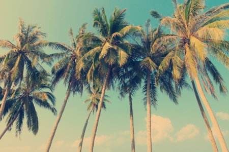 Photo for Vintage tropical palm trees - Royalty Free Image