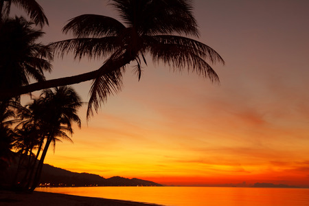 Tropical sunset beach with palm tree silhouette mural