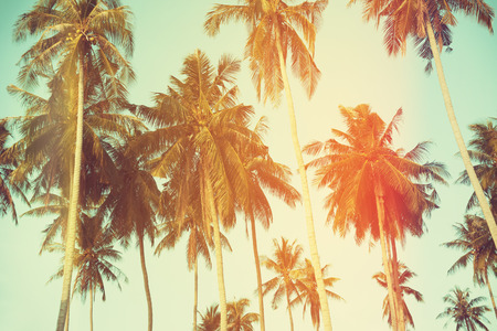 Photo for Palm trees at tropical coast, vintage toned and film stylized - Royalty Free Image
