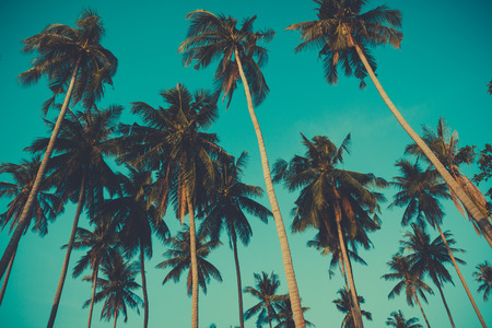 Photo pour Retro toned palm trees on over sky background - image libre de droit