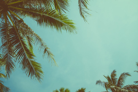 Photo for Vintage toned palm tree over sky background - Royalty Free Image