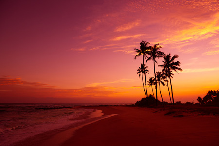 Photo pour Tropical beach with palm trees silhouettes at sunset - image libre de droit