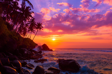 Photo pour Palm tress on tropical coast at sunset - image libre de droit