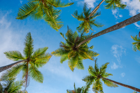 Photo for Exotic tropical palm trees at summer, view from bottom up to the sky at sunny day - Royalty Free Image