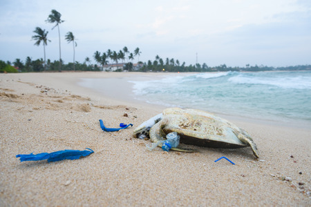 Photo for Dead turtle with a plastic garbage on ocean beach - Royalty Free Image