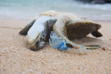 Photo for Dead turtle and plastic bottle garbage from ocean on the beach - Royalty Free Image