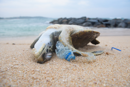 Foto de Dead turtle among plastic garbage from ocean on the beach - Imagen libre de derechos