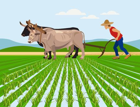Ilustración de Farmer plowing paddy field with pair oxen. Vector illustration - Imagen libre de derechos