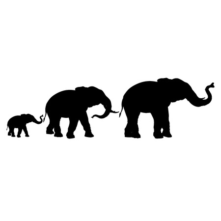 Illustration pour Silhouettes of elephants isolated on a white background. Bull, cow and calf. Vector illustration - image libre de droit