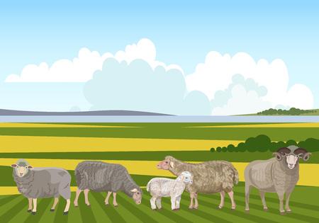 Ilustración de Flock of sheep grazing on mountain pasture. Vector illustration - Imagen libre de derechos