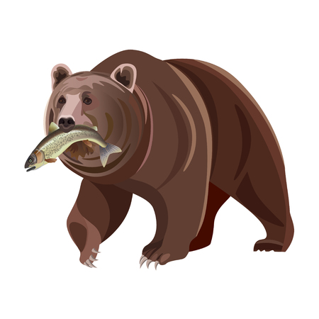 Ilustración de Grizzly bear with fish in mouth. Vector illustration isolated on white background - Imagen libre de derechos