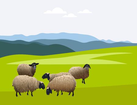 Ilustración de Herd of sheep on green pasture. Vector illustration - Imagen libre de derechos