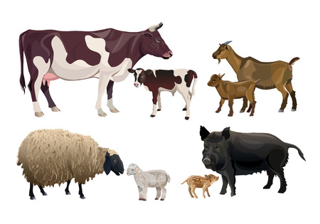 Illustration pour Farm animals and their kids. Cow, goat, sheep and pig. Vector illustration isolated on white background - image libre de droit