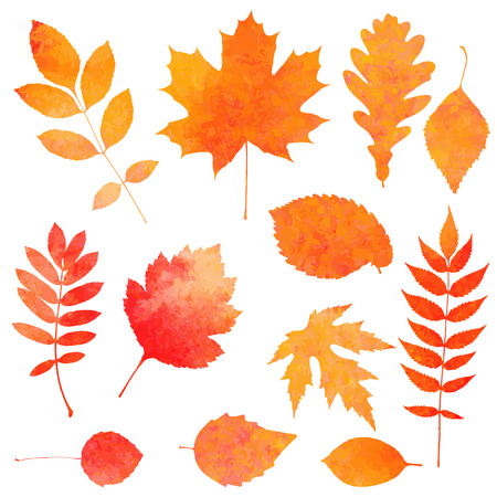 Illustration pour Watercolor collection of beautiful orange autumn leaves isolated on white background - image libre de droit