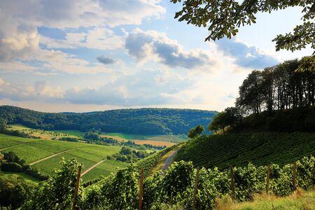 Photo pour Vineyards near Castell in Lower Franconia - image libre de droit