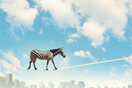 Foto de Image of zebra walking on rope high in sky - Imagen libre de derechos