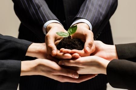 Photo pour Close up of businessmen hands with sprout in palms - image libre de droit