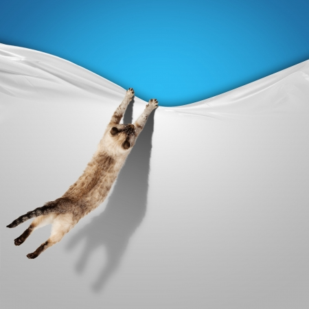 Photo pour Image of jumping Siamese cat playing with with sheet - image libre de droit