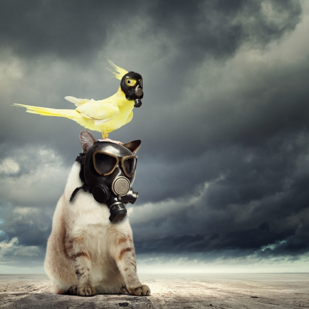 Foto de Cat and parrot in gas masks  Ecology concept - Imagen libre de derechos