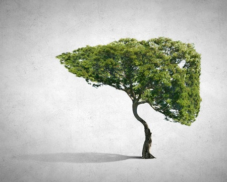 Foto de Conceptual image of green tree shaped like human liver - Imagen libre de derechos