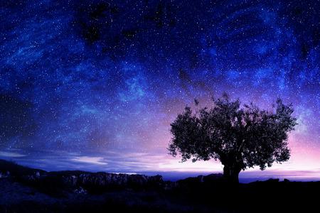 Foto de Starry sky and bushy tree among rocks - Imagen libre de derechos