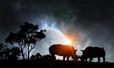 Photo pour Two rhinos fightning and night landscape at background - image libre de droit