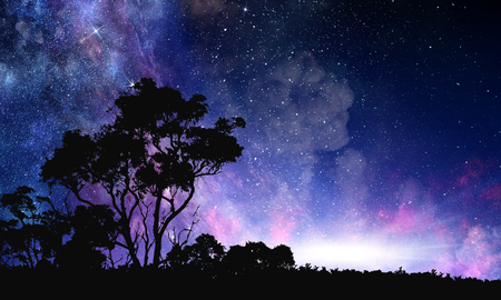 Photo for Night forest scene - Royalty Free Image