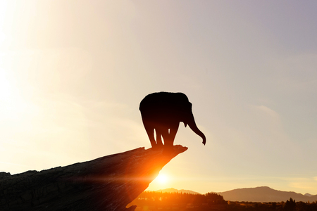 Foto de Silhouettes of elephant animal at sunset on horizon - Imagen libre de derechos