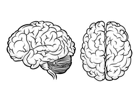 Illustration pour Vector human brain - image libre de droit