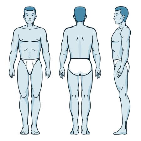 Illustration pour Man body model. Front, back and side human poses - image libre de droit