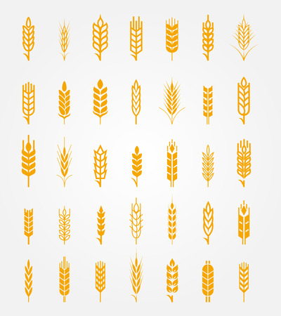 Illustration for Vector wheat ears icons set. Ear and organic wheat, bread agriculture, seed and plant, natural eat - Royalty Free Image