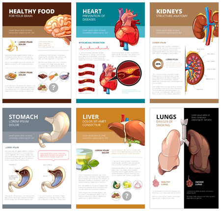 Photo for Internal human organs chart diagram infographic. Brain and heart, liver and stomach, lung and kidney, health medical science. Vector illustration brochure template - Royalty Free Image