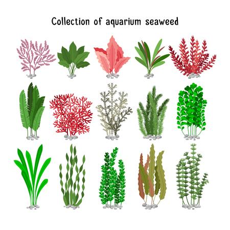 Ilustración de Seaweed set  illustration. Yellow and brown, red and green aquarium seaweeds biodiversity isolated on white. Sea plants and aquatic marine algae - Imagen libre de derechos