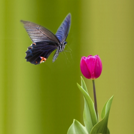 Photo pour Butterfly on nice flower for adv or other purpose use  - image libre de droit