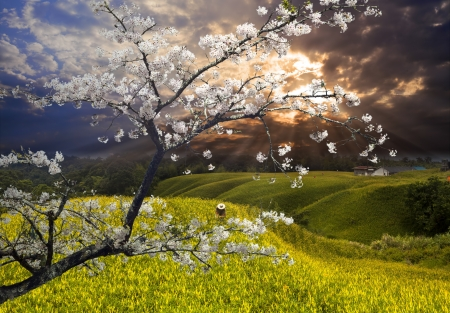 Foto de Nice landscape with sakura for adv or others purpose use - Imagen libre de derechos