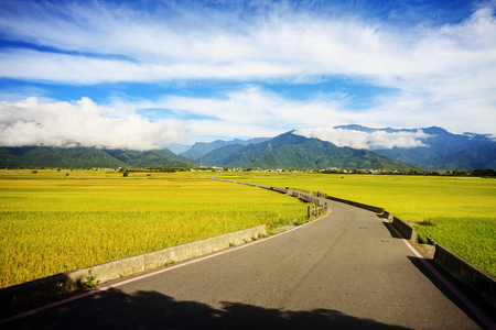 Photo pour Rural scenery with golden paddy rice farm at Luye, Taitung, Taiwan - image libre de droit