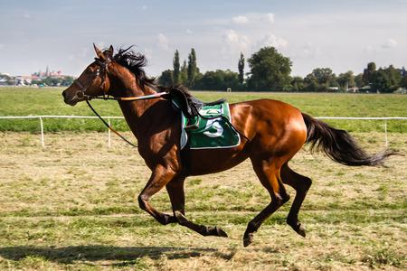 Photo pour Horse Race - image libre de droit