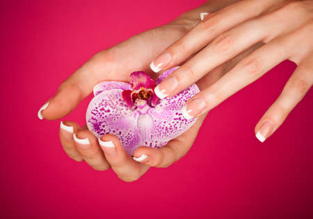 Human fingers with classic french-style manicure touching orchid over pink background