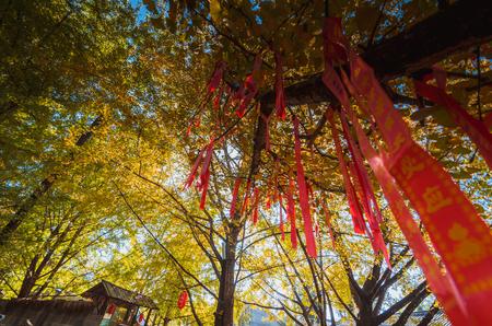 Photo pour Autumn wishing tree low angle view - image libre de droit