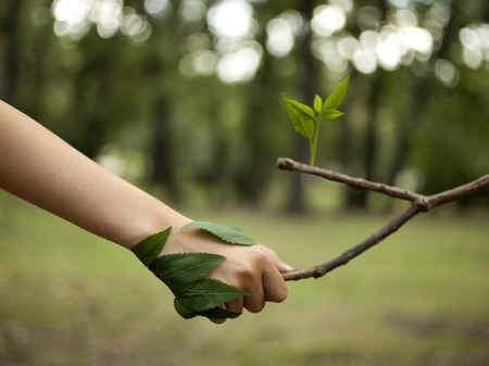 Photo pour Environment concept. Handshake between human hand and tree. - image libre de droit
