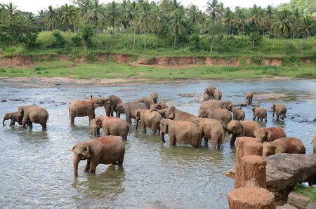 A Herd of Elephants in a lake mural