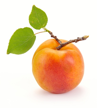 Photo for Apricot with leaves on a white background - Royalty Free Image