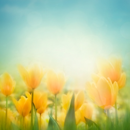 Spring Easter background with beautiful yellow tulips