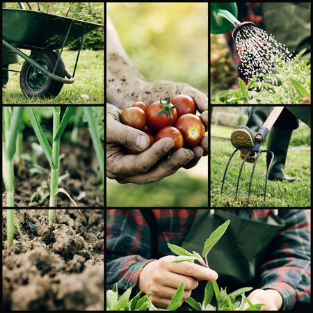 Photo for Garden. Collage of spring gardening work. Herbs and vegetables - Royalty Free Image