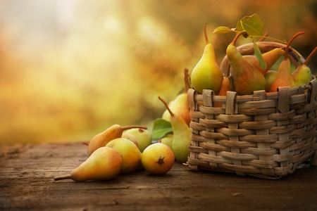 Foto de Autumn nature concept. Fall pears on wood. Thanksgiving dinner - Imagen libre de derechos