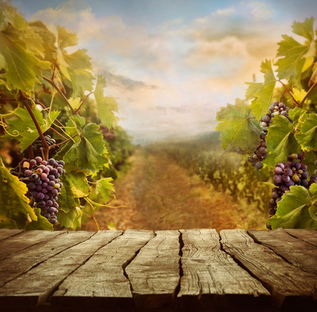 Photo pour Vineyard tabletop design with vineyard and empty display - image libre de droit