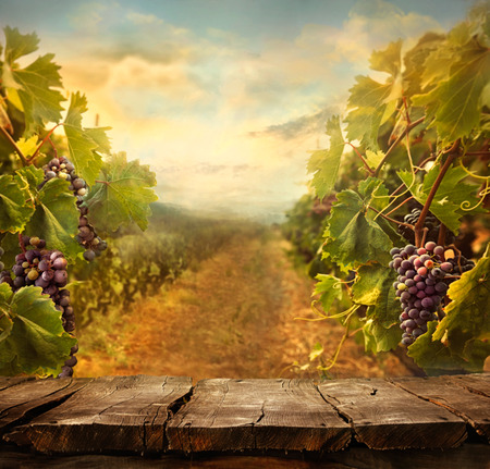 Photo for Vineyard tabletop design with vineyard and empty display - Royalty Free Image