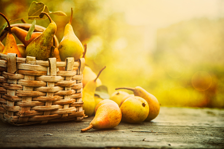 Photo for Autumn nature concept. Fall pears on wood. Thanksgiving dinner - Royalty Free Image
